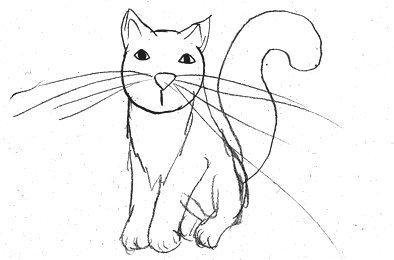 gatto.jpeg
